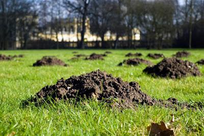 come-eliminare-le-talpe-dal-giardino-buche-vulcani
