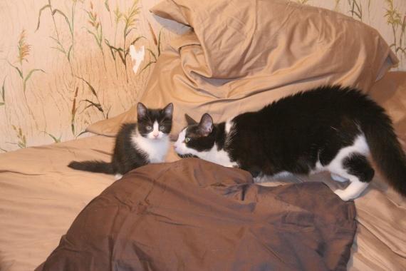 Comment faire cohabiter deux chats ? | Magazine zooplus