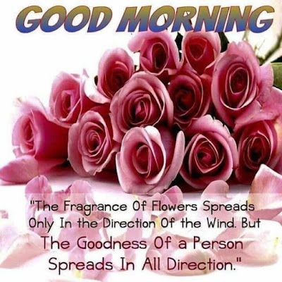 bunch of pink rose with good morning quote whatsapp