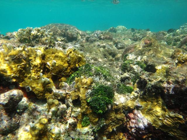 Guna Yala, el paraíso sobre y bajo el mar