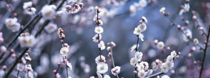 Imagenes de Amor, Flores Blancas, parte 6