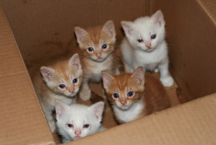 Tips Perawatan Kucing Setelah Melahirkan Yang Banyak Belum