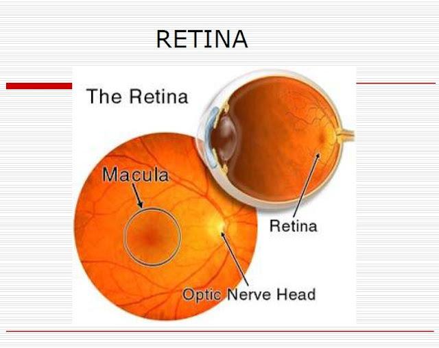 Makalah Anatomi Mata Bagian Luar dan Dalam dan Penjelasan Lengkapnya