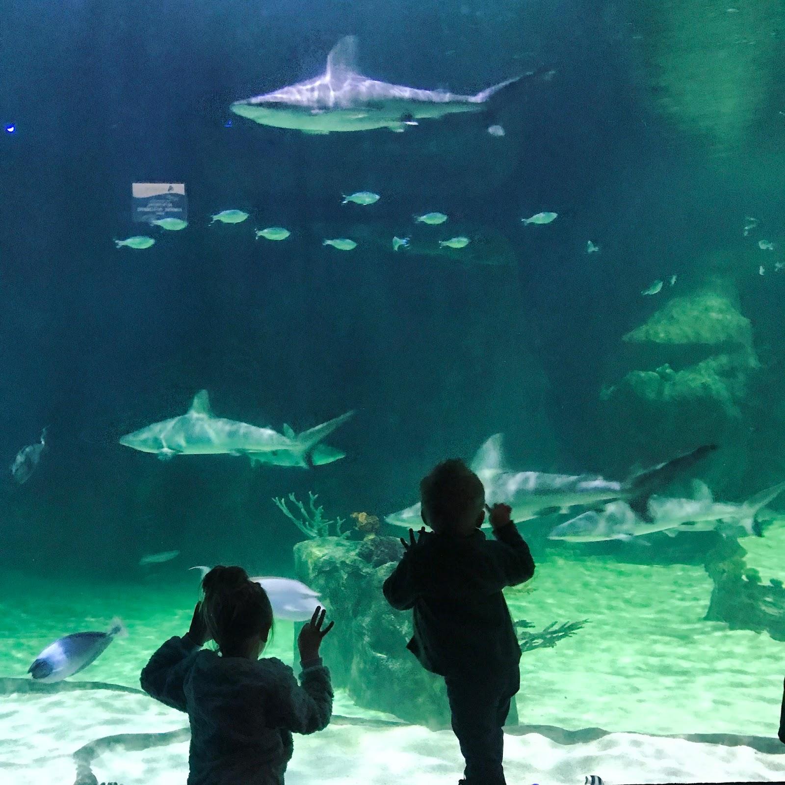 The Andrus Family Aquarium
