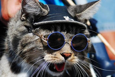 72fc5789896f3 It is great to see cute and funny cat pictures. A simple cat makeup way is  to have the cat to wear a pair of glasses. These cats have an EYE for  fashion.