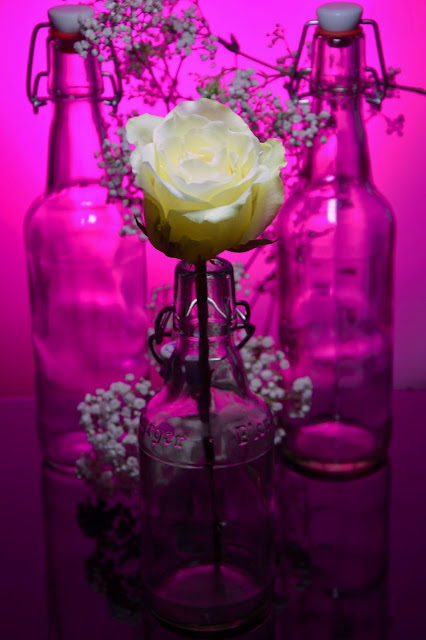 White Rose in Bottles with Background of Bottles and pink light