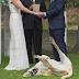 VIRAL! Η φωτογραφία του σκύλου στον γάμο που ''έριξε'' το Ίντερνετ...