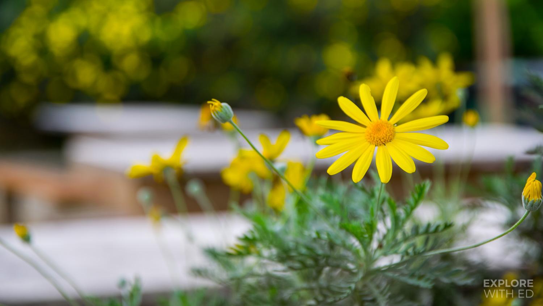 Flower Gardens of Domitilla