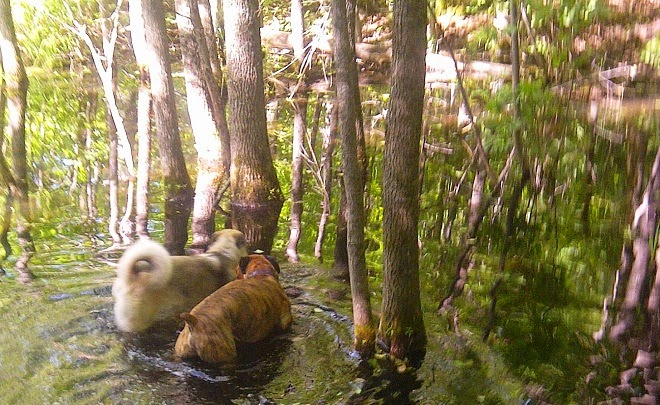Ottawa valley dog whisperer food for Farm raised fish