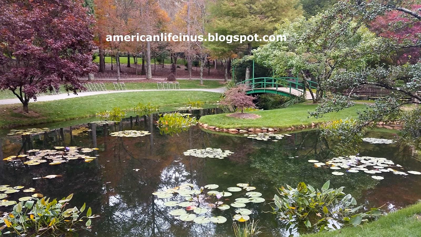 Обои цветы, сша, кусты, ball ground gibbs gardens. Природа foto 18