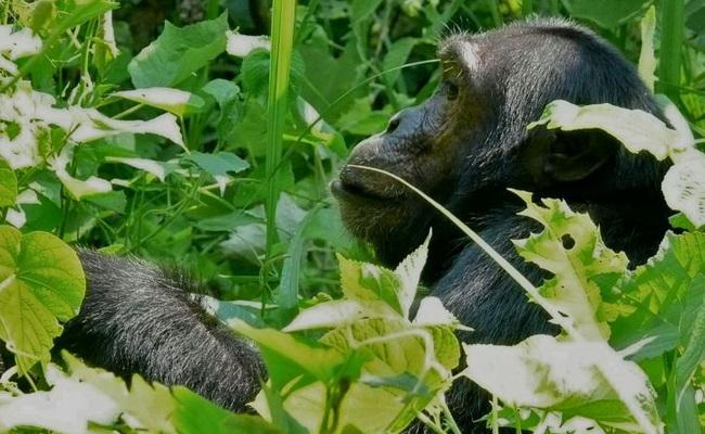 Xvlor.com Rubondo Island National Park is island reserve in Lake Victoria