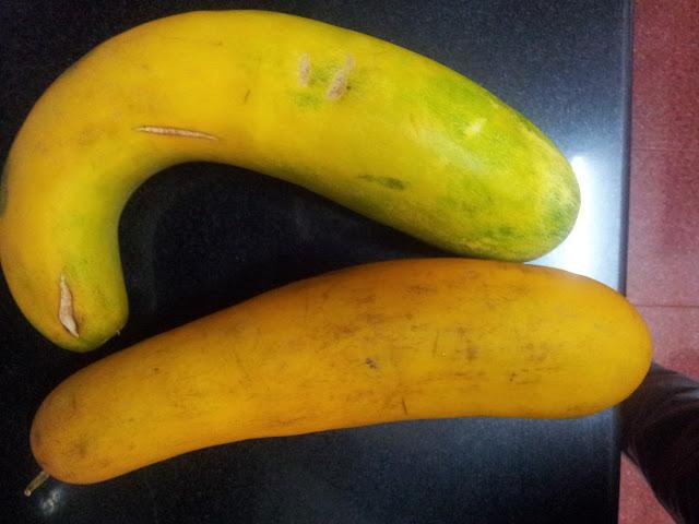 Cucumber Fruit or Vellaripalam