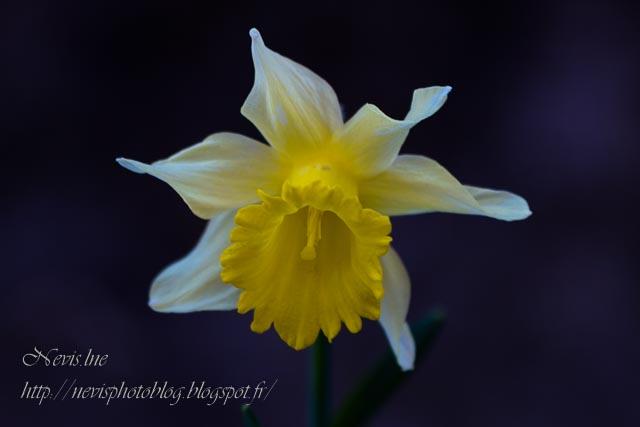 fleur jardin 3