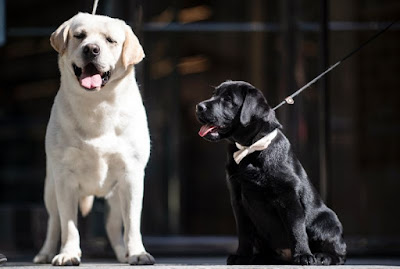 Doggy diagnosis can sniff out seizures: study
