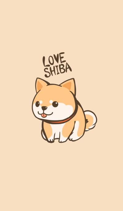 Chubby Shibainu