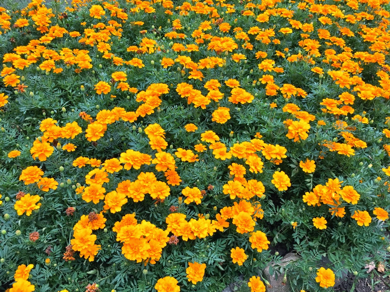 Jardim Botânico Francisca Maria Garfunkel - Curitiba (PR) flores