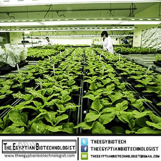 التكنولوجيا الحيوية الخضراء
