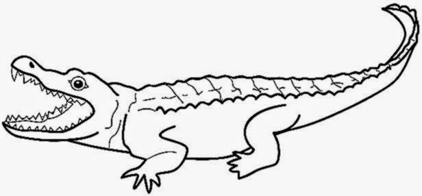 alligator coloring sheet free coloring sheet