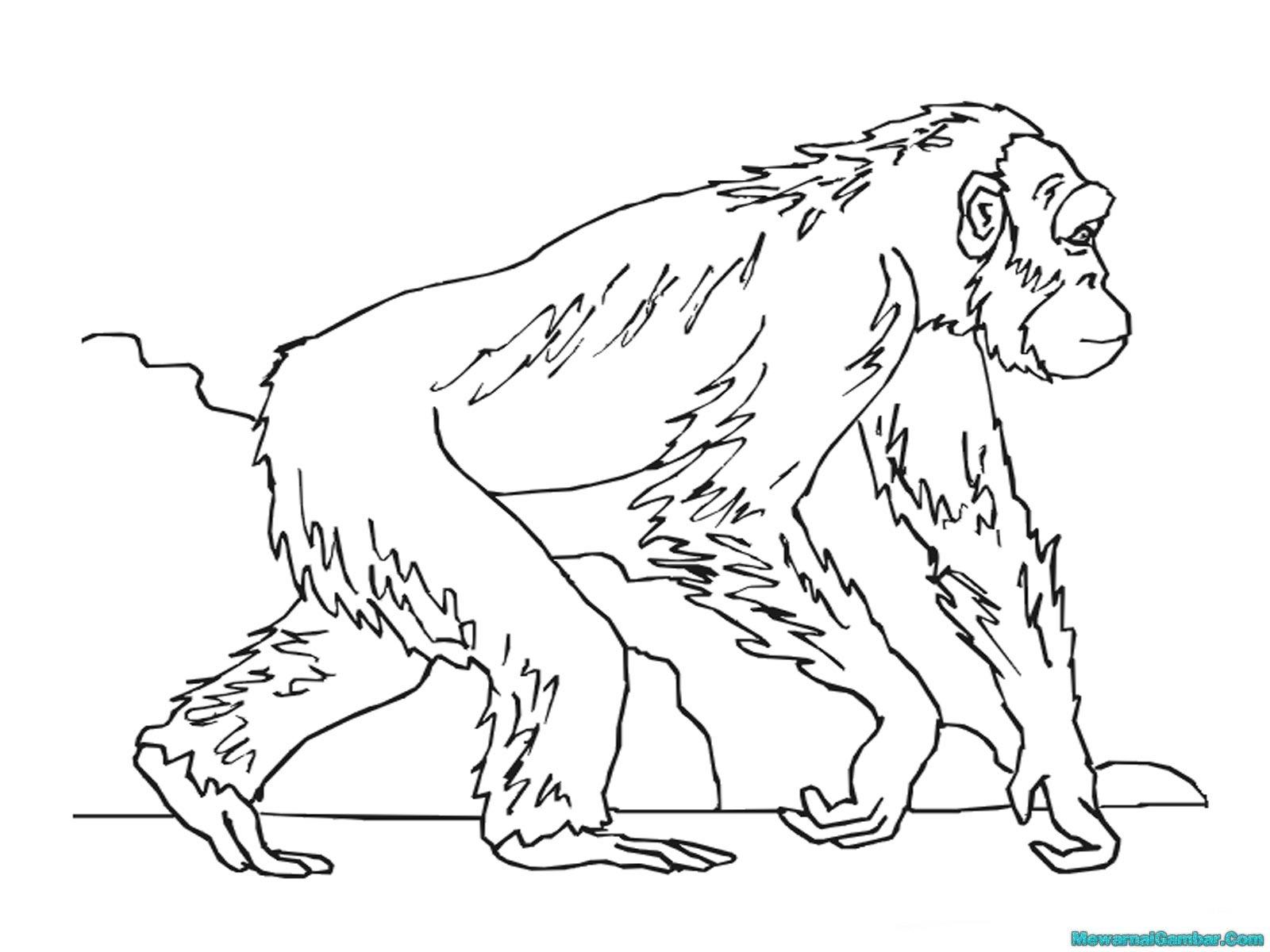 Sketsa Gambar Orang Hutan
