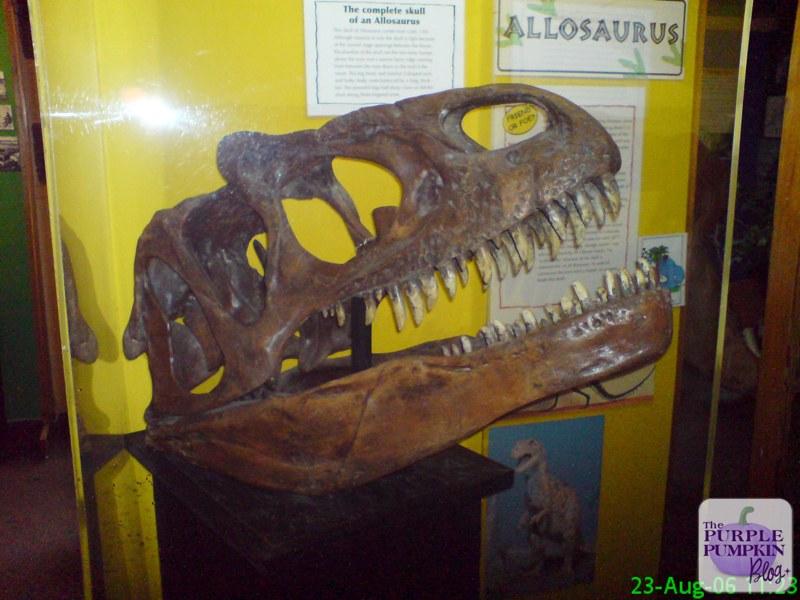 The Dinosaur Museum, Dorchester, Dorset [#MuseumWeek]