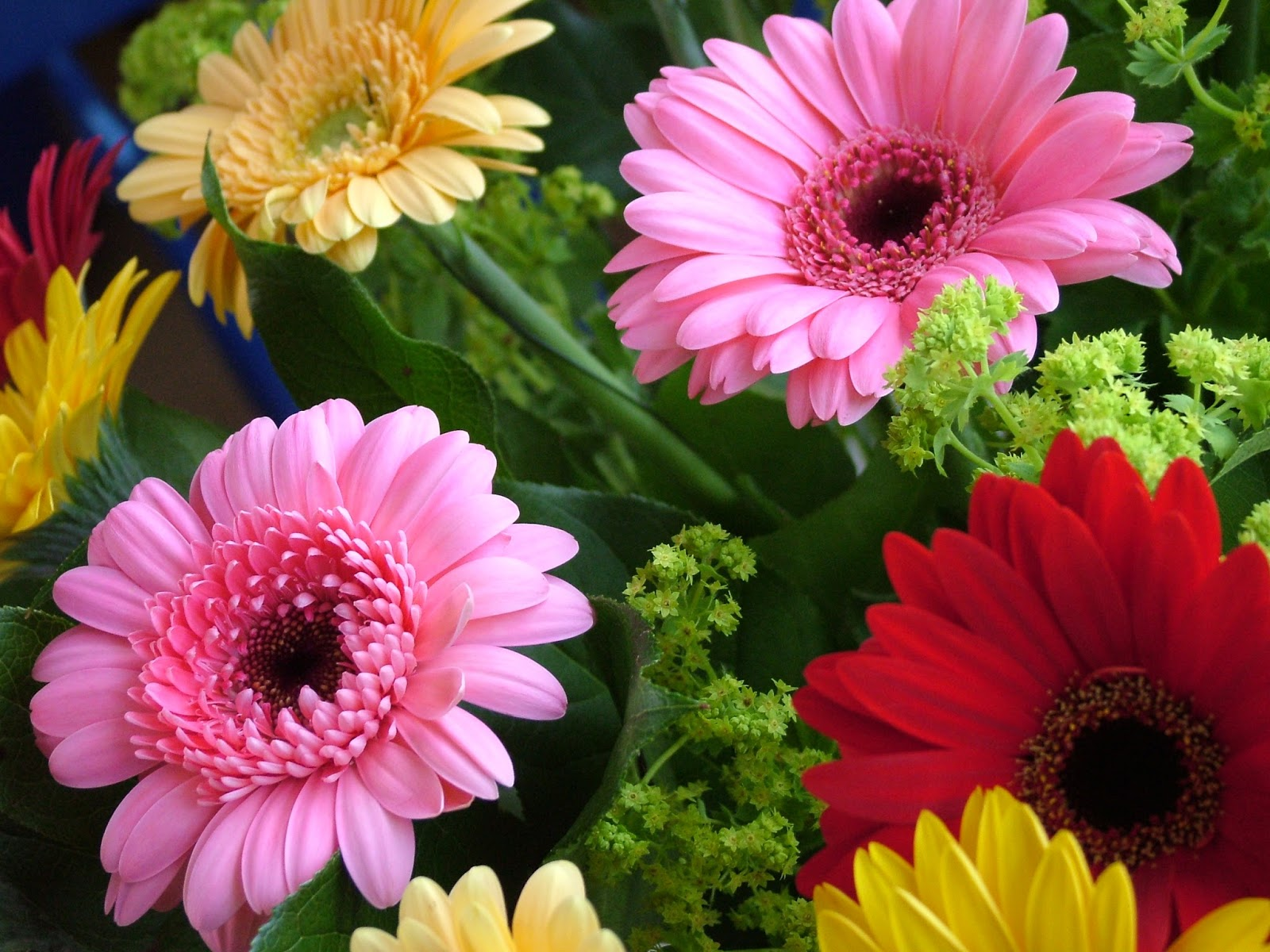 Real world gardener september 2017 if you look at gerbera flower you would think that its just one big flower head with lots of small petals in fact the flower head is a huge cluster of izmirmasajfo