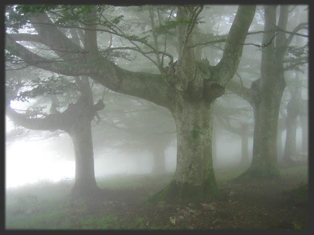Niebla misteriosa