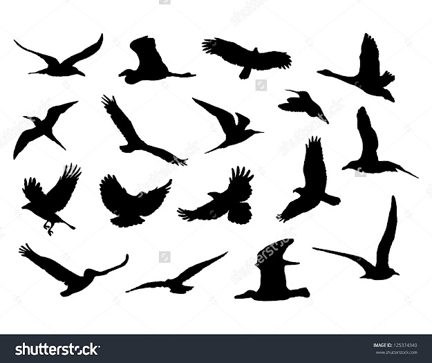 Collection Of Birds Vector Eps
