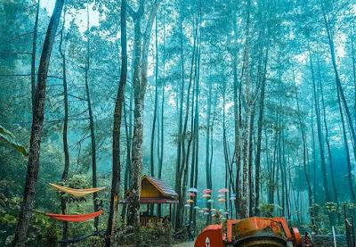 Wisata Hutan Alam Srambang Park Ngawi