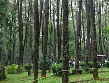 Hutan Wisata Punti Kayu