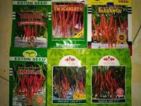 cara menanam cabe merah, menanam cabe merah, cabe merah, benih cabe, lmga agro