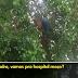 VÍDEO: Motorista alcoolizado sobe em árvore para fugir de prisão, assista