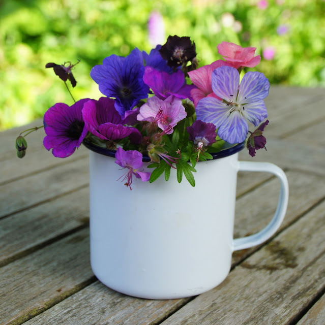 Geraniums flowers to put in an enamel mug
