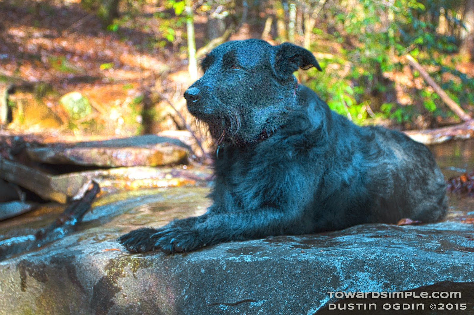 Dog relaxing at Savage Gulf Day Loop in TN