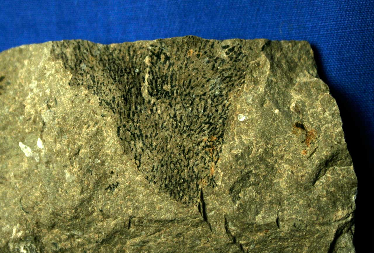 The Milestones and Major Developments in the Early Paleozoic Era Essay