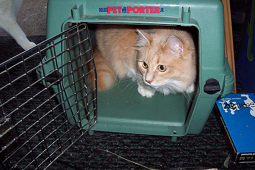 Cat Carriers For Safety