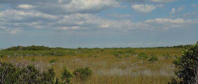 Marsh o pantano en el que predomina la hierba