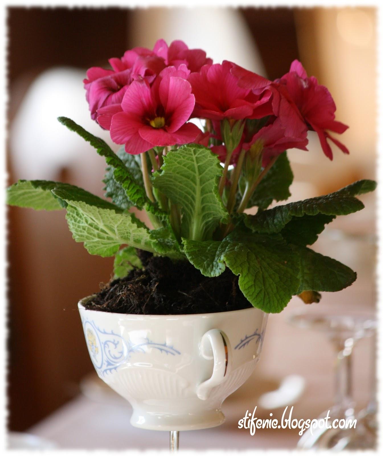 Primeln Und Gerbera Die Blumen Eines Tollen Tages