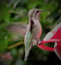 From My Hummingbird Feeder