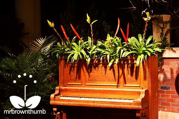 Planted piano, Macy's The Secret Garden