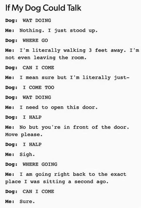 Funny If my dog could talk joke picture