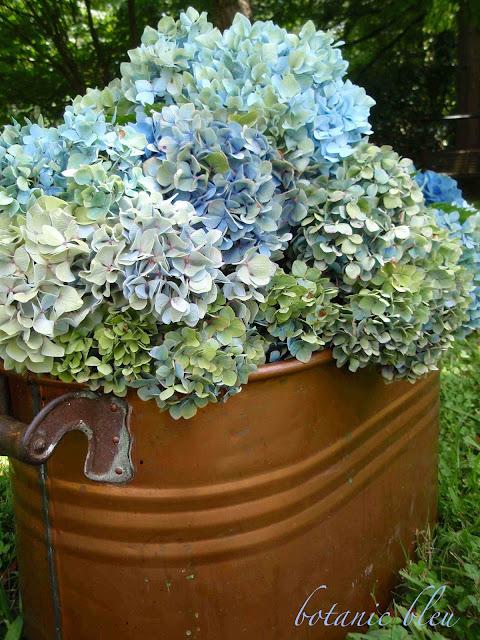 Blue and green hydrangeas fill an antique copper pot