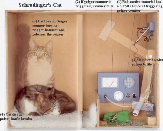 gato-schrödinger