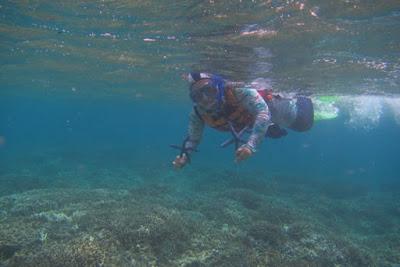 Snorkling di Menjangan