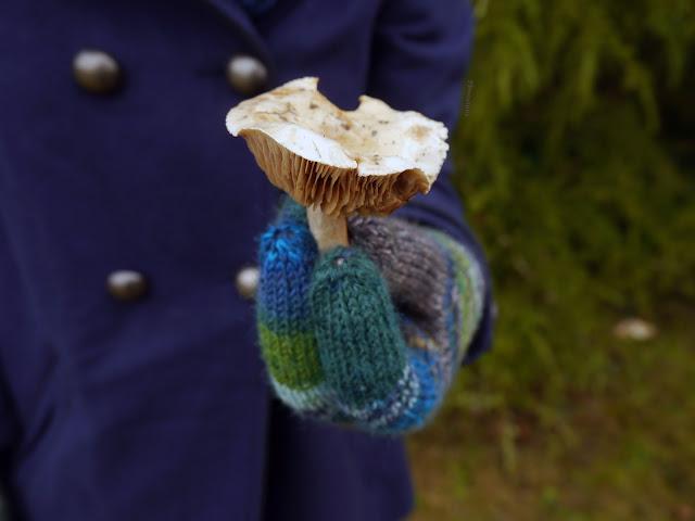 champignon dans la main