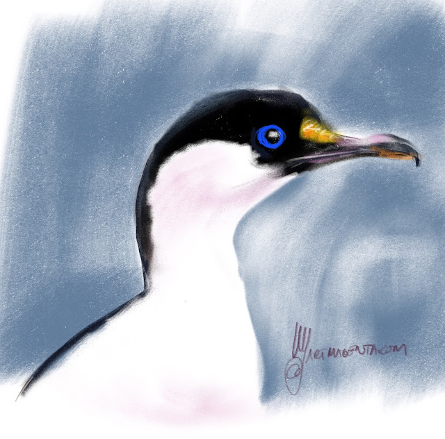 Blue-eyed shag a bird drawing by Artmagenta
