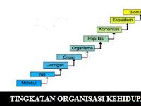 10 Tingkatan Organisasi Kehidupan Serta Penjelasannya Lengkap