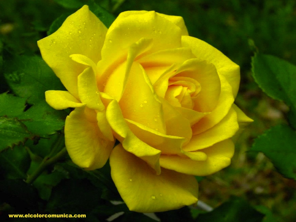 Blog Las Rosas