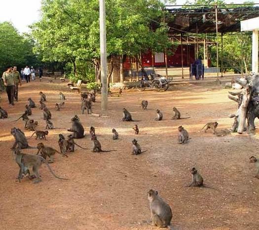 Đảo khỉ Cần Giờ ở đâu
