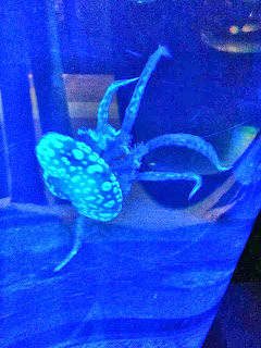 A spotty Jellyfish lit up with a blue neon light