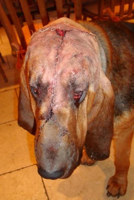Koiran Imusolmukesyöpä